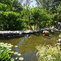 Nouveau : le bassin aux carpes Koï